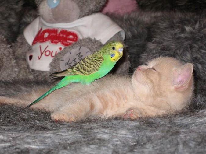 Сохранить в свой цитатник. Кот и попугай. Сохранить сообщение в цитатнике